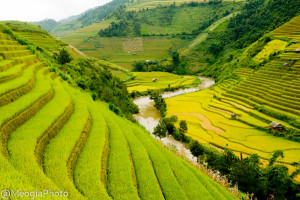 Rice terrace - Sapa tours