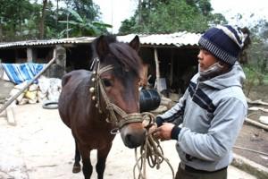 Horse in Bac Ha 1