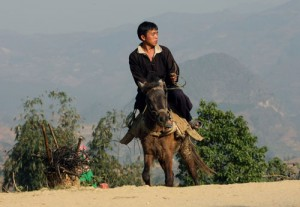 Horse in Bac Ha 2