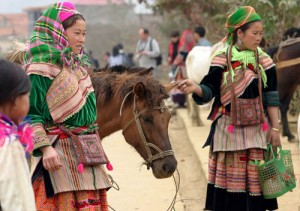 Horse in Bac Ha